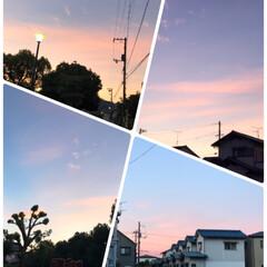 朝の散歩🐶/朝焼け/令和の一枚/LIMIAファンクラブ/LIMIAペット同好会/ブルー おはようございます😊  今朝は朝焼けの空…