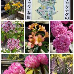 🐶水遊び/藤/シャクナゲ/花と緑の公園/春のフォト投稿キャンペーン/おでかけワンショット 公園のシャクナゲや藤の花が綺麗だったので…