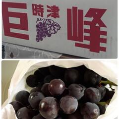 ぶどう/フード 今朝、長崎からぶどうが届きました🍇😊💕 …(1枚目)