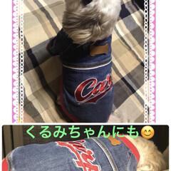 カープGジャン/ペット/ファッション くるみ🐶にも着せてみた😊