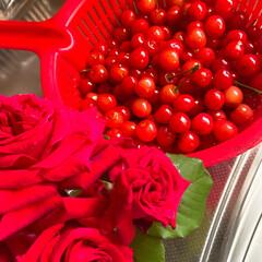 焼き芋🍠/手作りピザ/赤い薔薇🌹/サクランボ🍒/おうちごはん 今日も雨の降る前にとサクランボ🍒を収穫し…