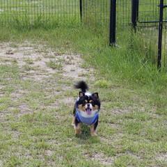 公園を散歩/空🐶/犬派/LIMIAペット同好会/わんこ同好会 今日は全国的に暑い1日でしたね☀️  み…