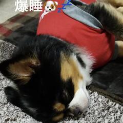 爆睡/空🐶/ペット/犬 気持ち良さそうに寝てる〜空🐶💤 寝てる時…