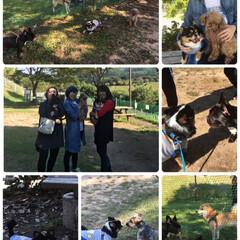 松茸/公園/ドッグラン/ペット/おうちごはん 今日は友達と🐶連れてドッグランのある公園…