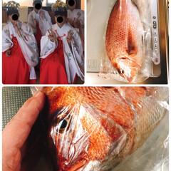頂いた鯛🐟/巫女ちゃん達/新嘗祭⛩ 今日は近くの神社で新嘗祭⛩  巫女ちゃん…(2枚目)