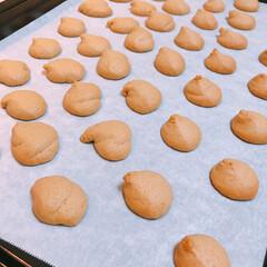 「コーヒー味クッキー作りました🤗  絞り出…」(3枚目)