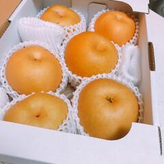 豊水/在宅/フルーツ/愛媛/梨/夏対策/... 愛媛の義実家から梨のお届け物〜🎁   あ…
