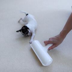 ぱくぱくローラー アイボリー N76C | 日本シール(掃除用ブラシ)を使ったクチコミ「タイルカーペットのお掃除は、我が家のマキ…」