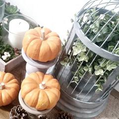 ハロウィン/秋/かぼちゃ/鳥籠/フェイクグリーン ハロウィンデコ