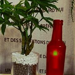 クリスマス/パーティー/お酒/おうちカフェ/バー/非売品/... スミノフ ボトルシェイプ LEDキャンド…(1枚目)
