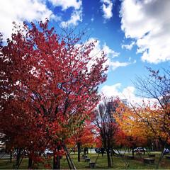 紅葉スポット/フォロー大歓迎 市内の紅葉スポット?で〜す!なかなか綺麗…