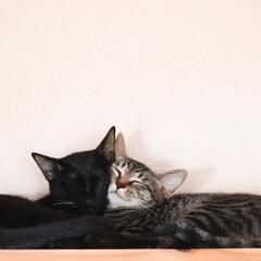 ねこ/猫/梅雨/ペット/リフォーム うちの猫とネコ(1枚目)