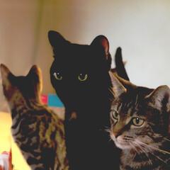 ねこ/猫/ネコ/梅雨 うちの猫とネコとネコ(1枚目)