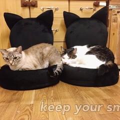 楽天/猫/椅子 /激萌え/送料無料/コンパクト 猫用のコンパクトな椅子が欲しくて楽天で買…
