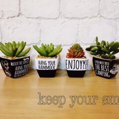 ダイソー/セリア/転写シール ダイソーのフェイク植物を、スプレーと転写…