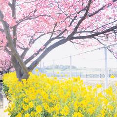 一眼レフ好きな人と繋がりたい/一眼レフ/三浦海岸/ドライブ/春が好き/菜の花/... *春が待ちきれないっ*  ちょこっと遠出…