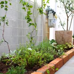 庭/ガーデニング/ガーデン/アプローチ/門扉/玄関/... 玄関までのアプローチに小さなお庭を 「都…