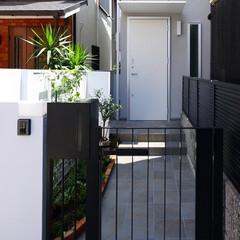 門扉/アイアン/北欧/庭/ガーデニング/ミモザ/... 黒いシンプルな門扉を活かしたアプローチ …