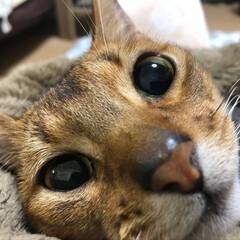 猫 ネコ/リミアの冬暮らし 甘えん坊のレオは1日1回は抱っこしてます…