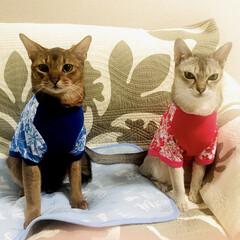 アロハ/ファッション/ペット 接触冷感シャツを見つけました!似合ってま…