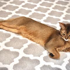 猫 ネコ ネコは優雅でいいなぁ!(1枚目)