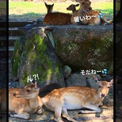 鹿🦌/ごはん