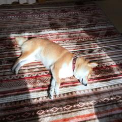 愛犬 日向を独占❗️