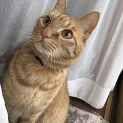 猫/うちの子ベストショット おすまし!
