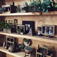 ボックス/せいろ/カッティングボード/収納/観葉植物/グリーン/... 和室の棚です!
