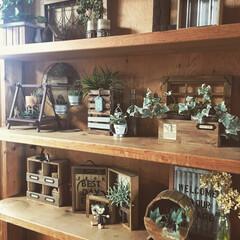 キーフック/フェイクグリーン/観葉植物/試験管スタンド/木工/木の家/... 最近ハマっているマイルドグレーを居間の棚…