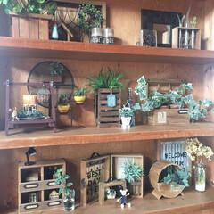 棚/木工/木/リメイク/キーフック/アクセサリー収納/... 100均リメイクした小物を並べた棚です!