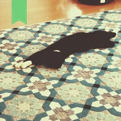 黒猫/でも23度/もどき/にわか/山下達郎が頭の中で再生/さよなら夏の日/... いきなり気温が上がって こんにとっての初…