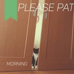 靴下猫/黒猫/猫と空間/猫と風景/猫のいる部屋/飼い主おかしい/... モーニングニャー