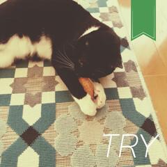 甘えん坊猫/甘え上手/甘えんぼ/保護猫/黒猫/靴下猫/... 今更、ラグビーを習う こんぶ🏉