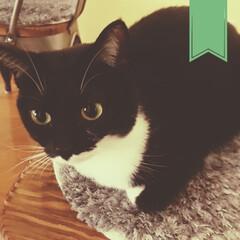 1才2ヶ月/保護猫ちゃん/保護ねこちゃん/保護ネコ/保護ねこ/保護猫/... 北国の朝は寒い。