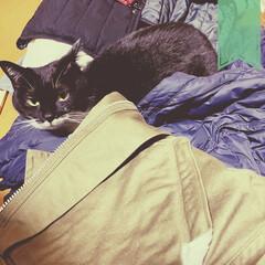 猫と空間/猫のいる家/猫と生活/ご機嫌ななめ/甘えんぼ/シャカシャカ/... 急に寒くなりダウンなど もろもろ出してた…(1枚目)