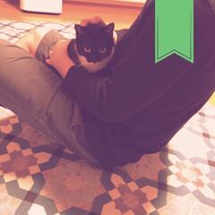 斉藤和義/茜色の夕日/祝/まだ赤ちゃん/11ヶ月/愛しい子/... 念願のだっこ、だっこ? 膝のり?笑 飼い…