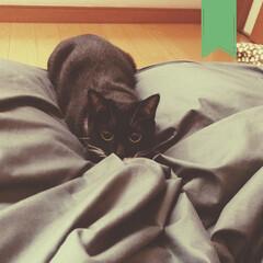 クロネコ/黒猫/保護ねこ/わがまま/臆病猫/ちょうど一歳/... フェスで1人の時間が多かったからか、甘え…