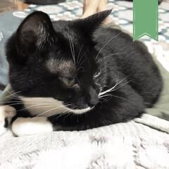 臆病猫/匂いフェチ/北国はもう寒い/わがまま猫/こんぶ/甘えんぼ/... 抱っこ嫌いな猫なはずなのに 自ら人の上に…