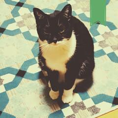 保護猫/黒猫/道東/こんぶ/RSR19余韻/夏が終わる/... ずーっと鳴いております。 甘え方が 鳴く…