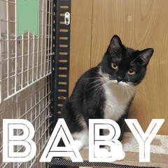 親バカ部/愛され/湯冷まし/こんぶ/保護猫ちゃん/赤ちゃん/... 保護団体の方から久しぶりに連絡が来て、近…