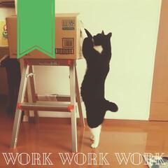こんぶ/保護猫/黒猫/猫と家/ねこのいる暮らし/ねこのいるくらし/... 倉庫内の軽作業なので 誰でも簡単に出来る…