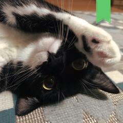 保護猫ちゃん/保護猫/猫と暮らす/黒猫ちゃん/黒ねこ/黒猫/... 可愛すぎる😭 親バカ😭