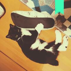 悪あがき/ねこ/保護猫/フォロー大歓迎/LIMIAペット同好会/にゃんこ同好会/... お留守番さんの悪あがき。 お花ってどうや…