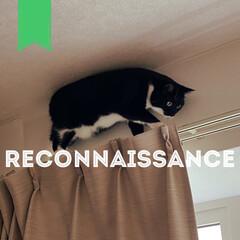 愛猫家/ねこと暮らす/猫との暮らし/レースカーテン/カーテン/部屋干し/... カーテンを洗って付けたときのこと。