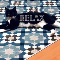 ソファ置かない派/リビング/シャビー/シャビーシック/ラグ/保護ネコ/... こんぶとラグのシャビー感がお気に入りです。