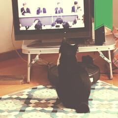 ネコと暮らす/ねこと暮らす/猫と暮らす/わがまま/ねこのいる家/猫のいる部屋/... 政治と金の問題を考える猫。  http:…