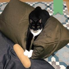 こんぶ/保護猫/黒猫 このおもちゃ、嫌い。  とのこと。 物理…
