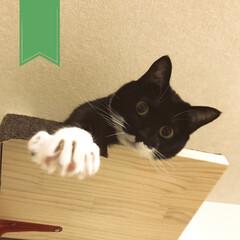 こんぶ/黒猫/猫のいる生活/猫のいる暮らし/猫と家/保護し合い/... この手につかまるんだ!!!