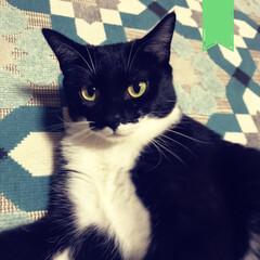 子育て/抱っこひも/抱っこまだ?/リスナー/ラジオ/昆布/... この人いつ、爪切らせてくれるの… 飼い猫…